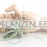 Wohngoldstück_Luftpflanze Tillandsie Beitragsbild