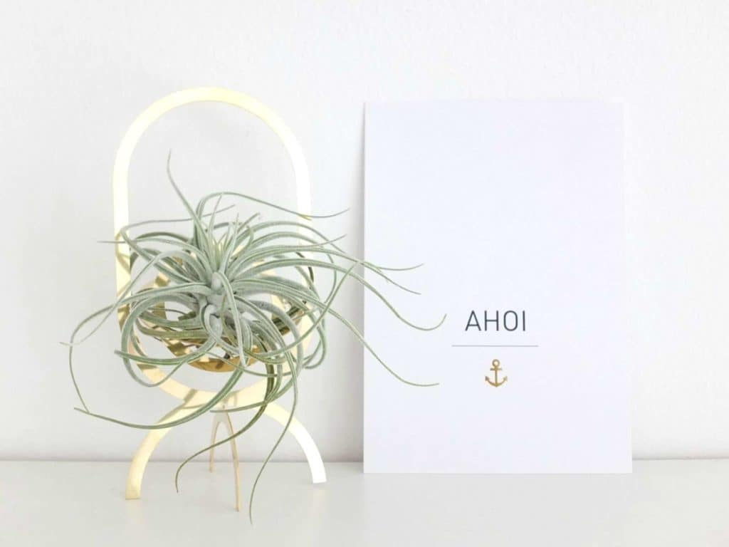 Wohngoldstück_Luftpflanze Tillandsie im goldenen Pflanzenständer