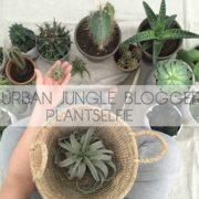 Wohngoldstück_Urban Jungle Bloggers Plantselfie September 2016