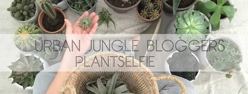 Wohngoldstück_Urban Jungle Bloggers Plantselfie September 2016