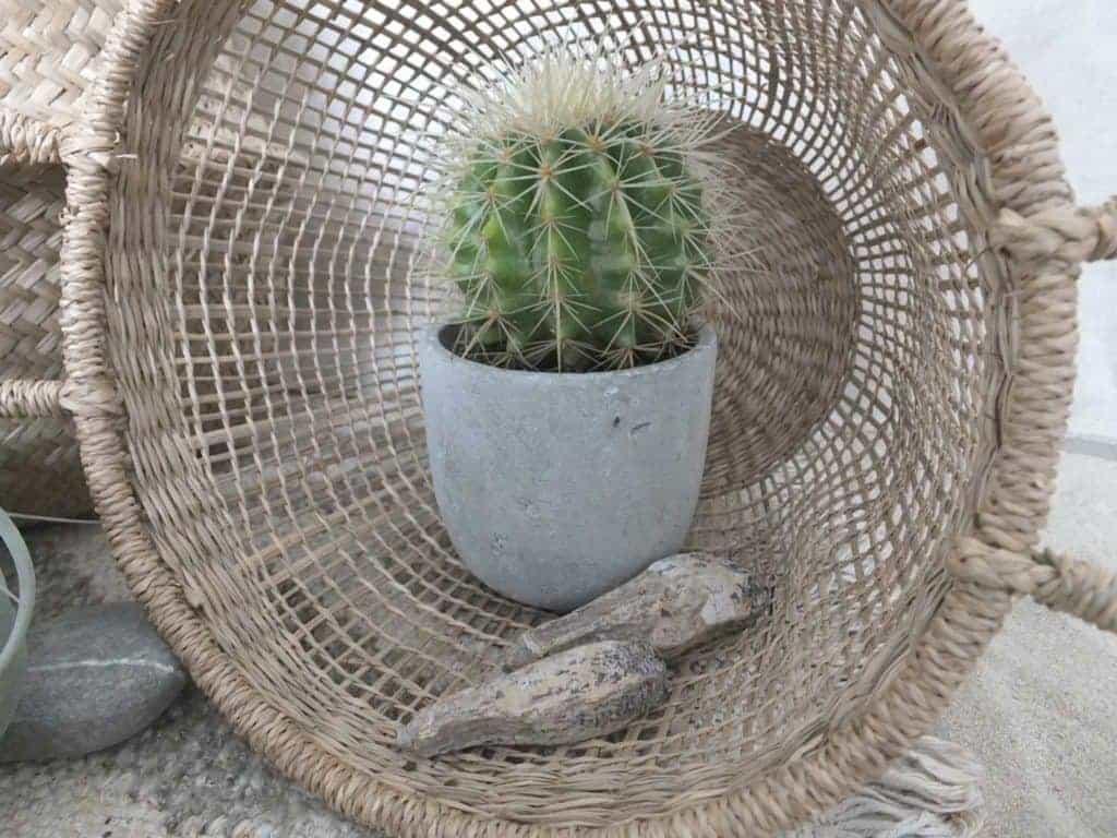 Wohngoldstück_Urban Jungle Bloggers_Plant Still Life_Desert_Oktober 2016