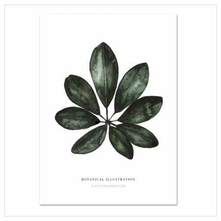 Wohngoldstück_Kunstdruck Leo la Douce Shefflera Arboricola