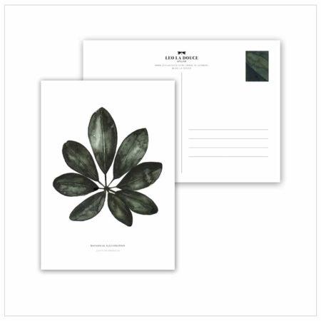 Wohngoldstück_Postkarte Leo la Douce Schefflera Arboricola