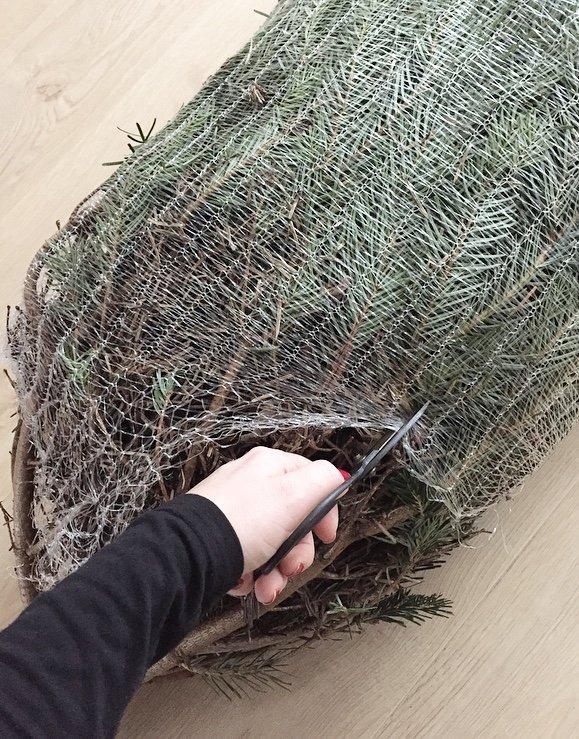 Mein schöner Garten Weihnachtsbaum online bestellen