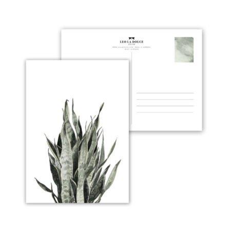 Wohngoldstück_Postkarte Leo la Douce Sansevieria