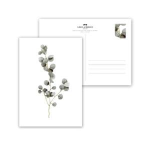 Wohngoldstueck_Postkarte Leo la Douce Eucalyptus